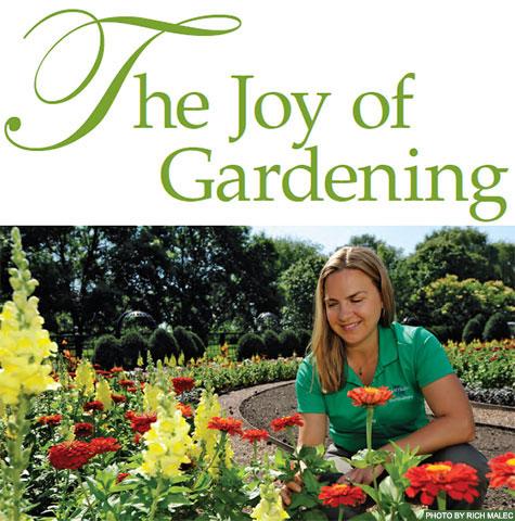 miami university miamian cover story - Garden Joy